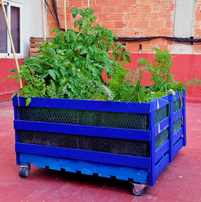 I've built an urban garden on my rooftop from recycled pallets found on the roadside.