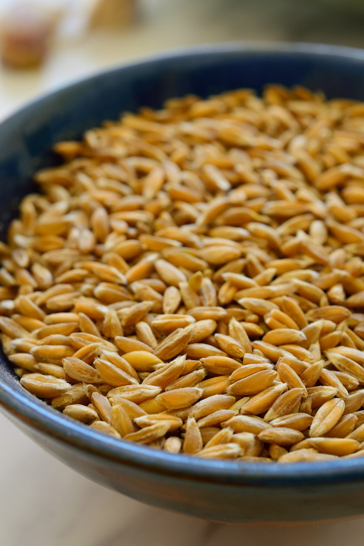 Dry farro in a blue bowl
