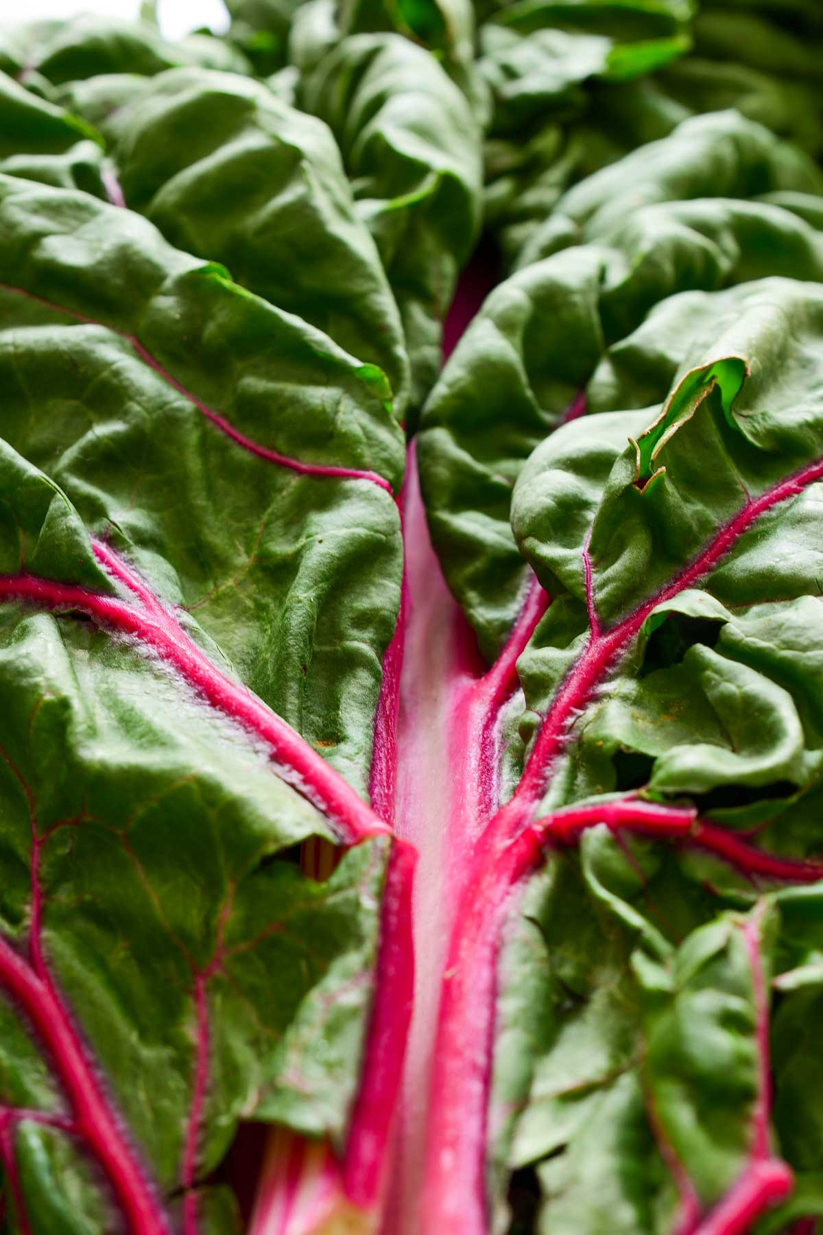 A close-up image of a pink Swiss chard leaf.